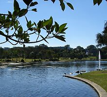 Pretty Park & Lake! Caboolture, Queensland. by Rita Blom