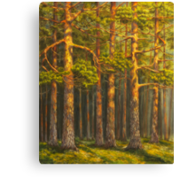 Pinewood Canvas Print