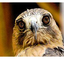 Hawk-Eye Photographic Print