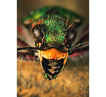 Tiger beetle close-up Photographic Print