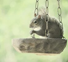 Bird Feeder? by DottieDees