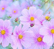 pretty little flowers.. by JOSEPHMAZZUCCO