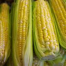 Sweet Corn by Tom  Reynen