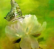 Malachite on Peony by Lois  Bryan