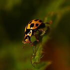 Yellow Lady Bug by xxkellywxx