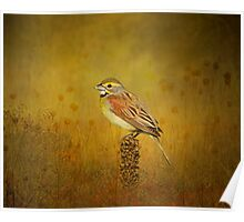 The Dickcissel Poster