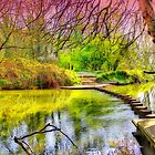 The Stepping Stones - Box Hill - Orton  by Colin  Williams Photography