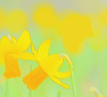 Daffodil Garden by pseth