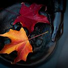 Autumn Leaves Gathering by Orbmiser