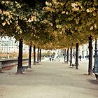 Jardin des Tuileries, Paris by Chris Bavaria