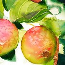 Apples by Sally Griffin