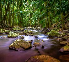 Curtis Falls Mount Tambourine Gold Coast HDR by MikeAndrew