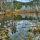 Quiet Pond by Dianne Phelps
