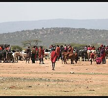 Masai Cattle market by CharlotteMorse
