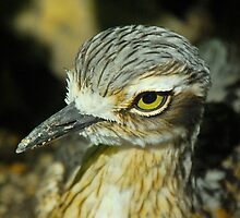 Bush Thick Knee Profile by peasticks