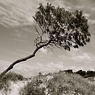 Wind Swept by pictureit