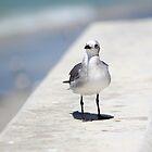 Lone Seagull by Dani Gee Phokus & [x]Pose
