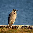 Majestic Heron by Dani Gee Phokus & [x]Pose