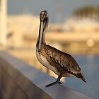 Pelican at The Pier  by Dani Gee Phokus & [x]Pose