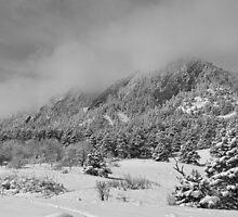 Springtime Colorado Rocky Mountains Boulder BW by Bo Insogna