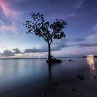 A lone mangrove off Pohnpei shore by paulbonnitcha