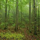 the forest by dc witmer