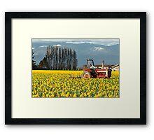 Workin' the Daffodil Fields Framed Print