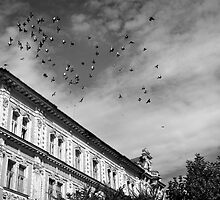 birds flying over by Karen E Camilleri