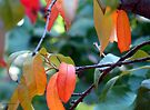 The autumn leaves of a peach tree by Elizabeth Kendall