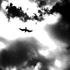 Flying High by greywolf260