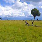 Masai Mara 4 by Charuhas  Images