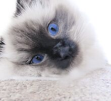 Cute as a button! by Sally Green