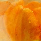 Very Orange Tulip by Diane Schuster
