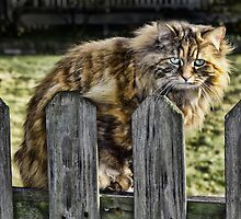 Sitting On The Fence  by carlosramos