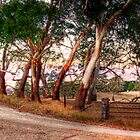 Woodside, Adelaide Hills SA  by Mark Richards