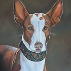 Kenzie the Ibizan Hound by Charlotte Yealey