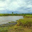 River Mara in Kenya by Charuhas  Images