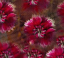 Burgundy flower design by ♥⊱ B. Randi Bailey