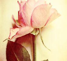 Vintage Rose by Sybille Sterk