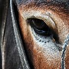 horse look by marinagamu