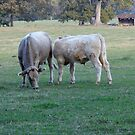 Country Cows by WildestArt