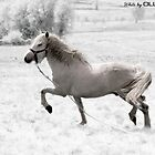 White by ollodixital