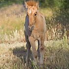 Gallop Little Colt by Sue  Cullumber
