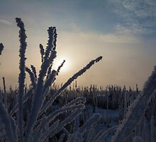 Frosty by phillphoto