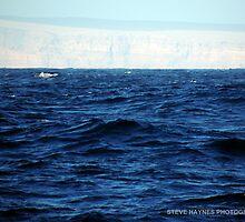 Land Ahoy.  by Steve Haynes  Photography