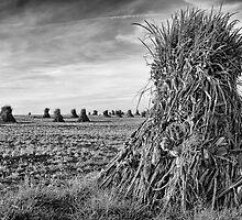 The Harvest by dlhedberg
