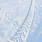 Tracks by globeboater