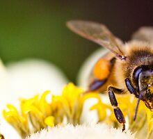 Honey Bee by Jazzyjane