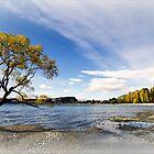 Tree - Lake Wanaka  New Zealand  -  2013 by bekyimage