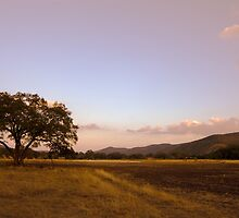 Texas Hill Country Ranch at Dawn by Paul Wolf